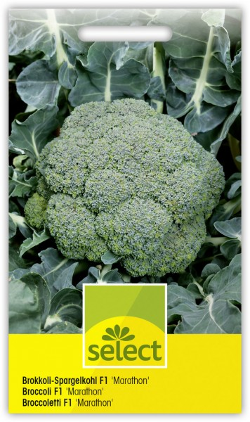 Broccoli Marathon - Vorderseite