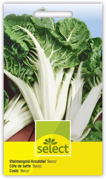 Stielmangold-Krautstiel 'Berac' - Beta vulgaris flavescens
