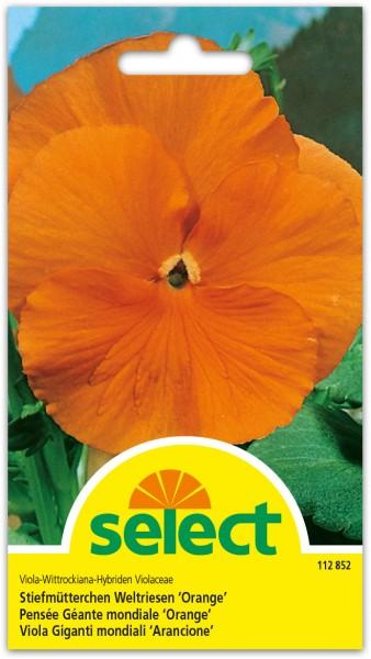 Stiefmütterchen Weltriesen 'Orange'