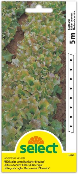 Pflücksalat 'Amerikanischer Brauner' (Saatband)