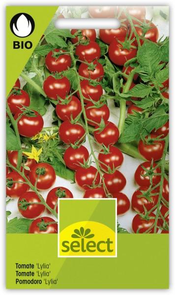 Tomate 'Lylia' - Lycopersicon esculentum