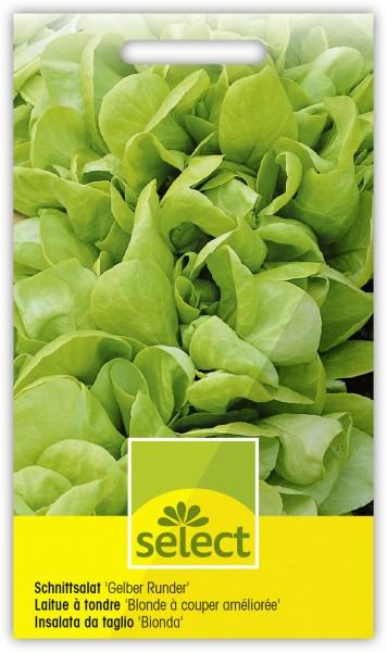 Schnittsalat 'Gelber Runder' - Lactuca sativa L. var. Seculina